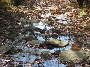Creek of Fallen Leaves